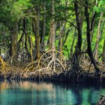 7 Tips Berwisata ke Kawasan Mangrove