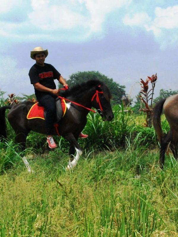 Paket Berkuda di Bali Ubud