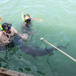 Tour Shark Swim di Bali