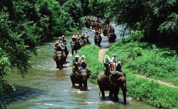 Elephant Safari Park Bali Tour