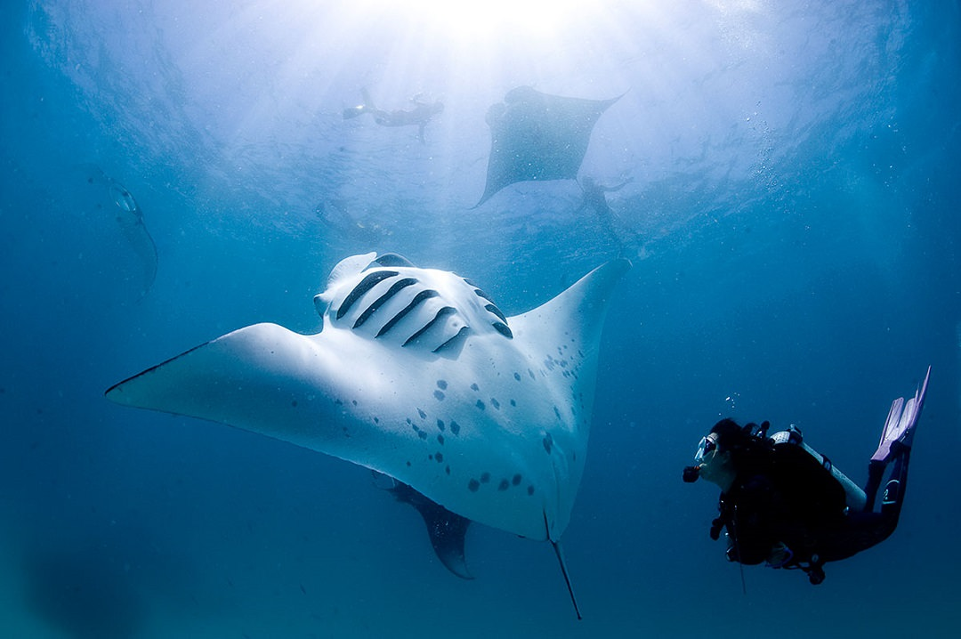 Scuba Diving Nusa Penida & Lembongan