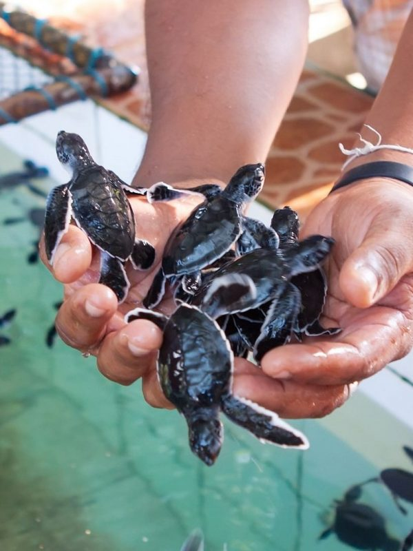 Turtle Island Bali Pulau Penyu