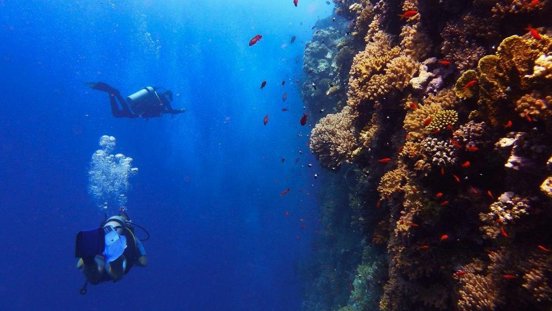 Diving Menjangan Bali